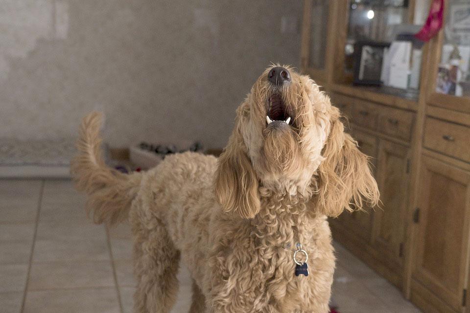 Barking problems